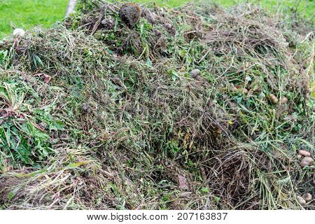 pile of gardening waste with grass and old flowers close up