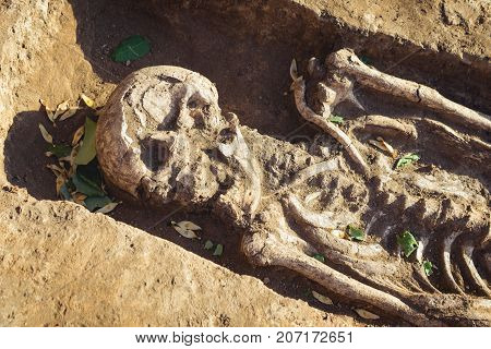 Archaeological excavations. research on human burial skeleton skull