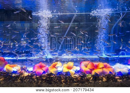 Thai foot massage aquarium in the center of  prague