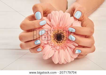 Gentle gerbera in female manicured hands. Beautiful female hands with fashion manicure holding peach color gerbera on white wooden background. Modern winter nail design.