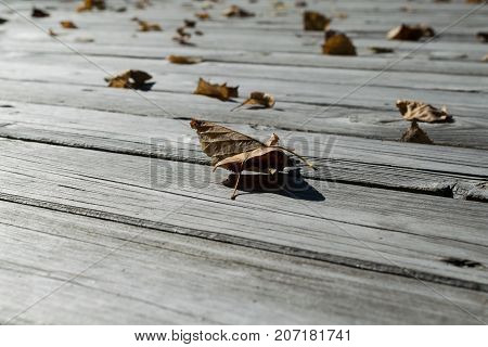 On the wooden floor are fallen leaves of yellow and orange. Many fallen autumn leaves lying on the surface. The sun is shining. A cool Sunny day. Autumn change of season.