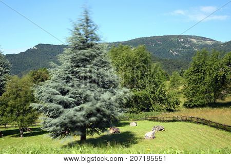 Moving Effect  Of Tree And Grass In The Mountains Due To The Lon