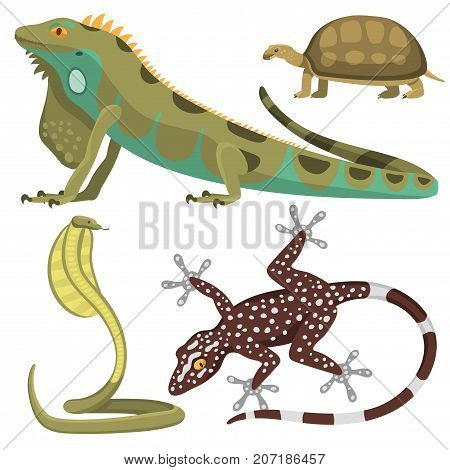 Reptile and amphibian colorful fauna vector illustration reptiloid predator reptiles animals. Exotic cartoon vertebrate tropical iguana africa set.