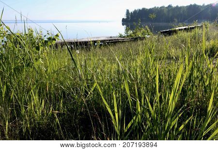 grassy shore of the lake in early morning sunlight, Uvildy, South Ural