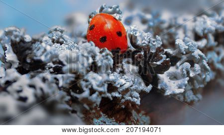 sunny ladybird in the forest grey moss