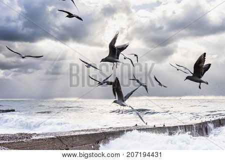 Gulls fly over a stone beach in stormy weather