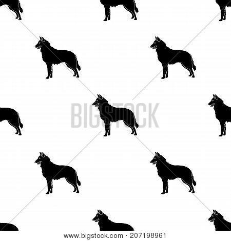The dark Belgian wolf. Belgium single icon in black style vector symbol stock web illustration.