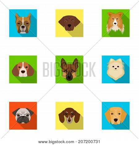 Doberman, Dalmatian, Dachshund, Spitz, Stafford and other breeds of dogs.Muzzle of the breed of dogs set collection icons in flat style vector symbol stock illustration .