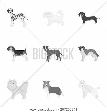 Dalmatian, dachshund, poodle, and other  icon in monochrome style.Bernard, laika, shepherd icons in set collection