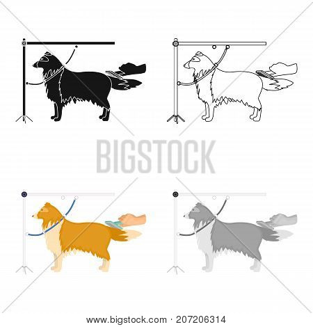 Combing a pet's fur, a dog in a stylish salon. Pet , dog care single icon in cartoon style vector symbol stock illustration .