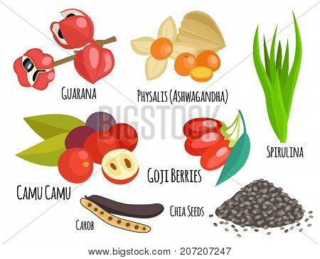 Vegetarian superfood healthy vegetable eco food fresh organic traditional gourmet nutrition vector illustration. Eating restaurant appetizer delicious snack.