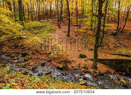 Brook In Autumn Forest On Hillside