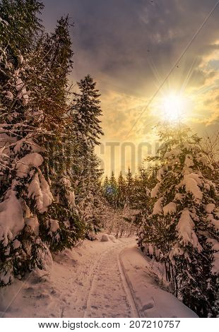Path Through Spruce Forest In Winter At Sunset