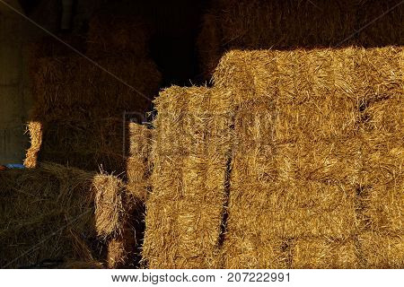 The hay storage shed full of bales hay on farm
