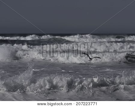 heavy waves on the ocean with a gull