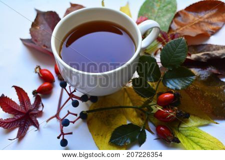 Cup of tea from the hips the actual autumn, in the season of colds