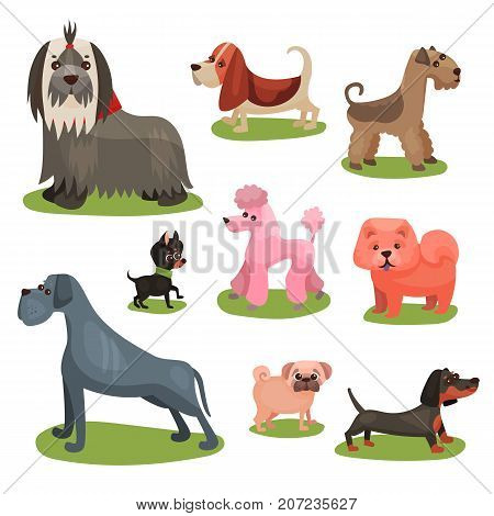 Different breeds of dog set, furry purebred human friends colorful vector Illustrations on a white background