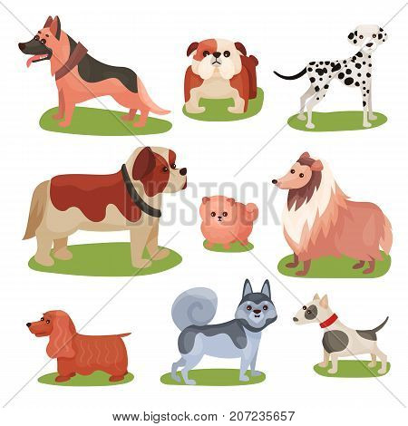 Different breeds of dog set, purebred pets animal colorful vector Illustrations on a white background