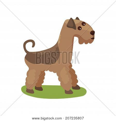 Airedale dog, purebred pet animal standing on green grass colorful vector Illustration on a white background