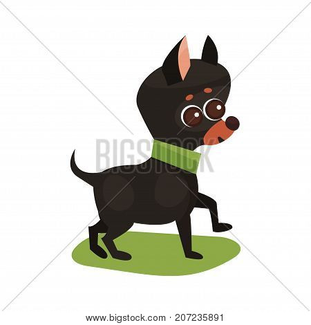 Chihuahua dog, purebred pet animal standing on green grass colorful vector Illustration on a white background