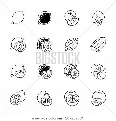File type icons - GraphicsCitrus fruits icons. Citrus fruits vector illustration. Fruits and seasoning in outline style. Vegetarian food signs. Professional vector icons for fruits and spices.