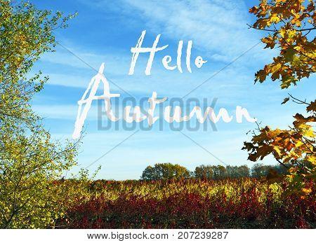 Autumn landscape with colorful trees and blue sky.Hello Autumn.Fall season,autumn concept.Selective focus.