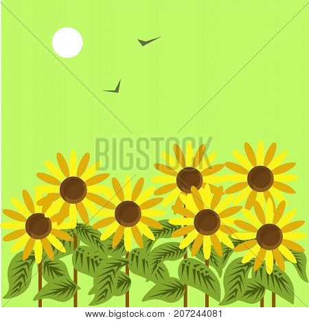 Ripe sunflowers under dim sun in green sky with black birds that fly away vector illustration. Yellow flowers with edible seeds in blossom. Great autumnal scene of weather that becomes colder.