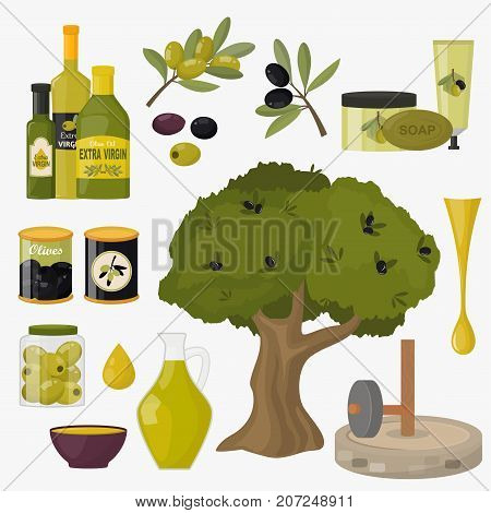 Olives products branch organic plant ingredient nature agriculture fresh vegetable vector illustration. Freshness traditional green food.