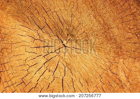 texture of a cut old tree with cracks