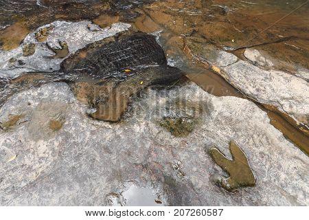 Footprint Of Dinosaur ( Carnotaurus ) On Ground Near Stream At Phu Faek National Forest Park , Kalas
