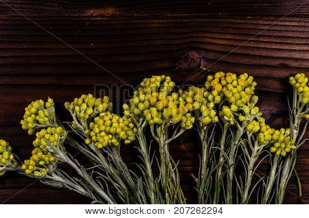 Medicinal Plant Helichrysum Arenarium On Wooden Table. Top View