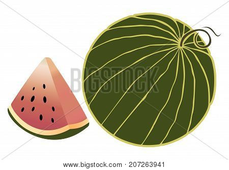 Vector watermelon isolated on white background juicy ripe slice of watermelon and whole