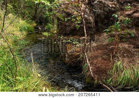 a forest stream flowing in the mountain Altai, Siberia