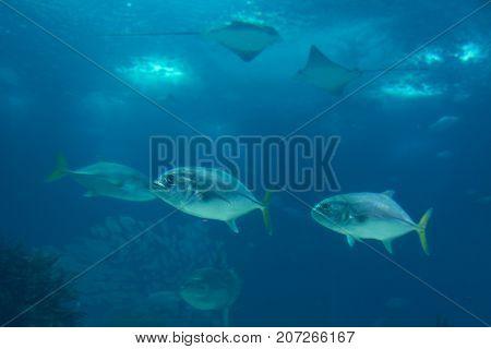 Fishes inside Blue Aquarium Tank, Fish Theme