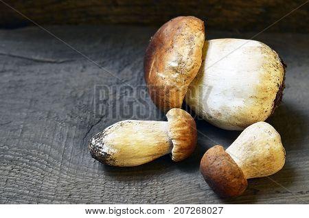 Boletus edulis mushrooms on old wooden background. Autumn Cep Mushrooms.Porcini mushrooms.White mushrooms.Selective focus.