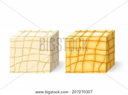 fat tissue. Cross section of the human adipose tissue. Human anatomy. Vector illustration for your design and medical use. Different views of a human fat