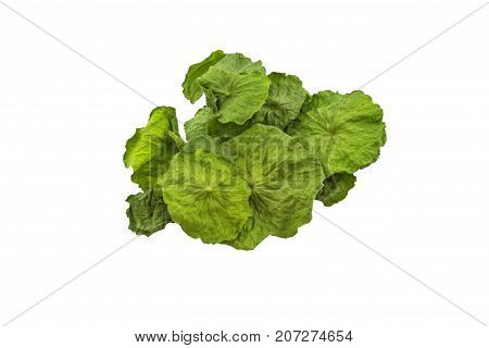 Close up dry of Asiatic Pennywort (Centella asiatica Hydrocotyle umbellata L or Water pennywort ) on white background