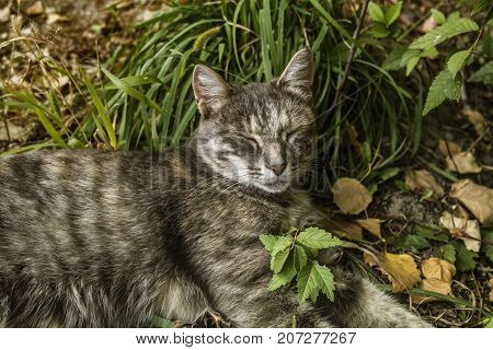 Sleeping cat. Grey cat on green grass.Grey cat. Gray cat portrait. Gray cat background.