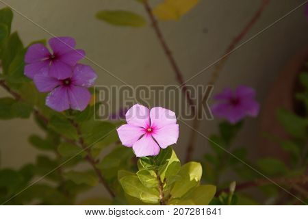 Beautiful small flowers, which represent the beauty of the nature.