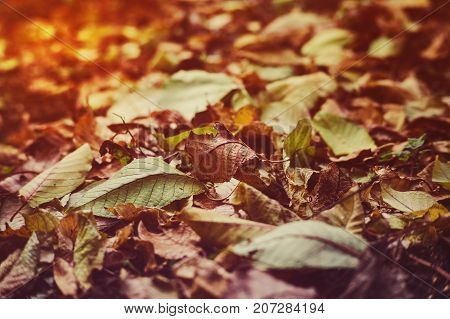 The Concept Of Autumn