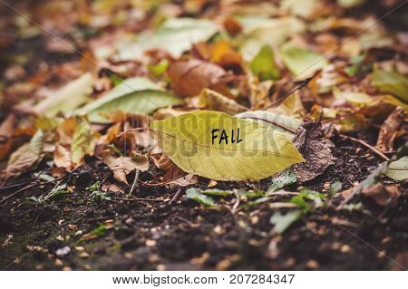 Many Yellow Fallen Leaves Labeled Fall.