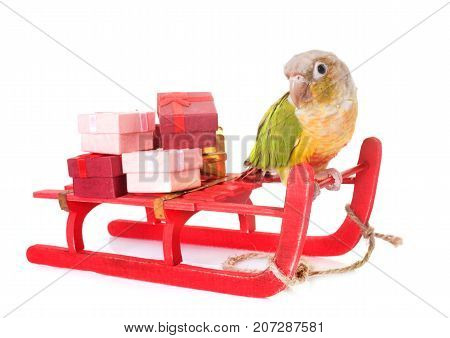 bird and christmas decoration in front of white background