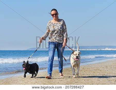 woman and dogs walking on the beach