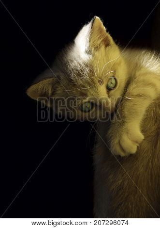 Vertical portrait of a cute funny kitten with blue eyes over black background.
