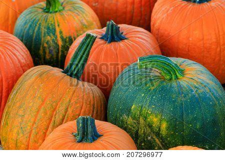 Assorted green and orange pumpkin squash with stalks