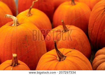 Assorted orange pumpkin squash with stalk, background blurred