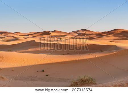 Caravan Of Camels In Erg Chebbi Sand Dunes Near Merzouga, Morocco