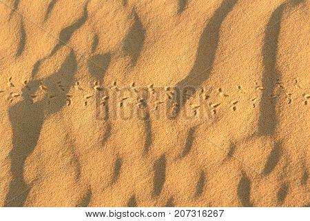 Animal Tracks On Sand