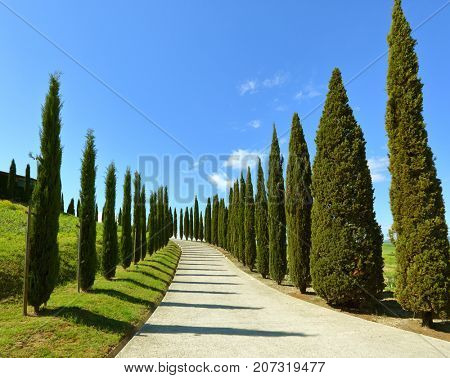 Road on a hill with cypress trees in Tuscany, Italy