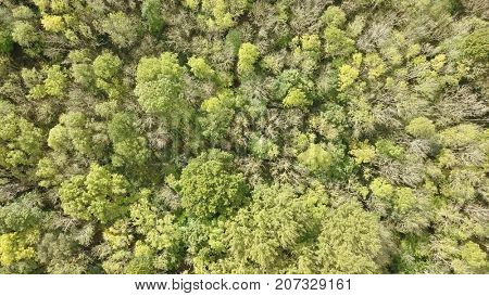 Aerial photo above deciduous forest woodland canopy